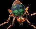 Grounded Bombardier Beetle